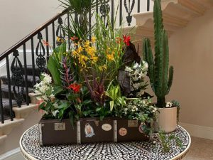 An old suitcase made into a gorgeous plant display