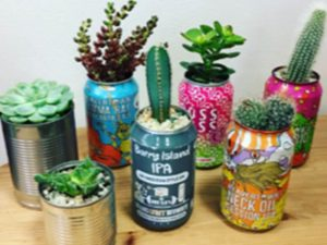 Old tin can planters for mini tropical plants