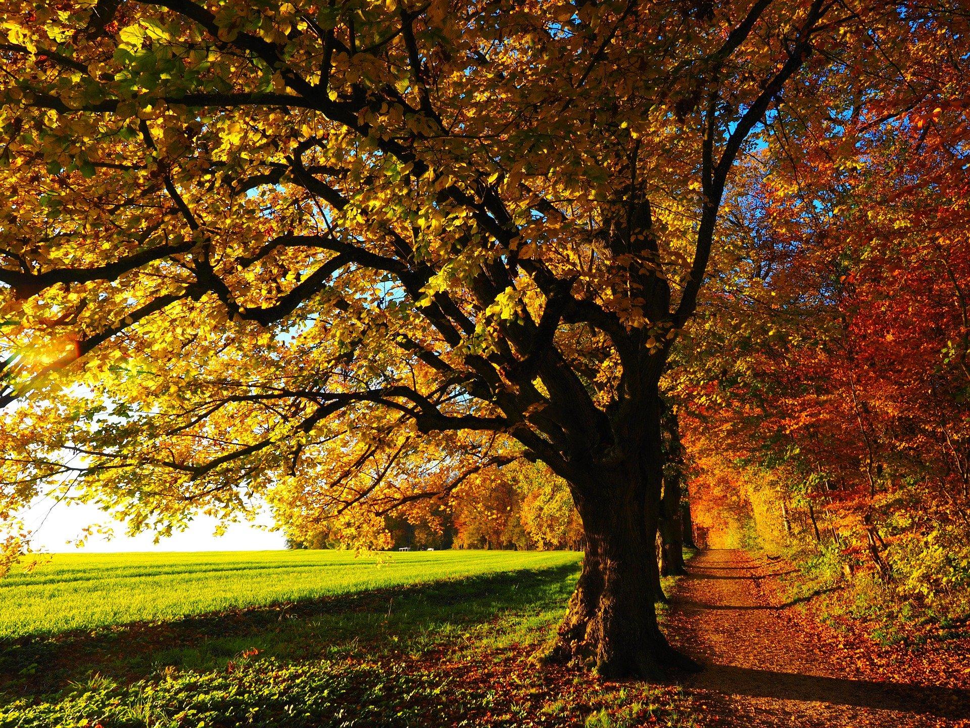 tree land environmental iso 14001:2015